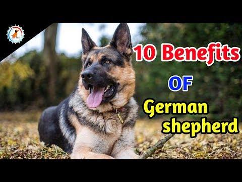 10 Benefits Of German shepherd / In Hindi / benefits of German shepherd