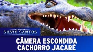 Câmera Escondida (13/11/16) - Cachorro Jacaré ( Croco Dog Prank )