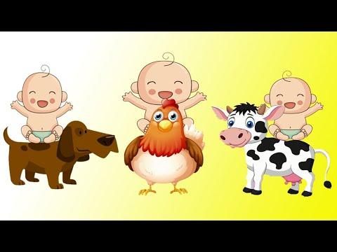 lernvideos-für-kleinkinder-deutsch-tiere---tiere-für-kindergartenkinder-|-bebi-tv