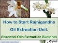 How to Start Rajnigandha Oil Extraction Unit. Essential Oils Extraction Business