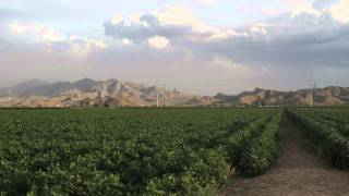 Sustainable Agriculture in Arizona