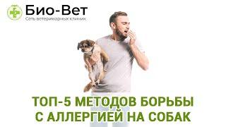 Топ-5 Методов Борьбы С Аллергией На Собак & Что Делать, Если Появилась Аллергия. Ветклиника Био-Вет