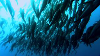 Planet Ocean - Trailer
