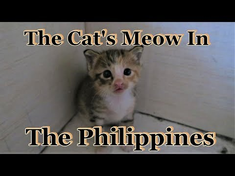 The Cat's Meow In The Philippines