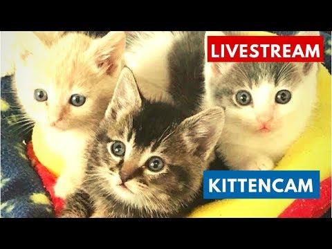 Kitten Cam livestream 🐱🐱  NEW LITTLER: Paw Wars Kittens! powered by cuteavalanche.tumblr.com