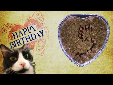 How To Make A Cake For A Cat | Cat Birthday Cake Recipe