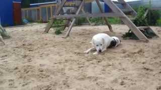 """гостиница для домашних животных в Чебоксарах """"Дог-Отель"""""""