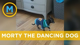 Our host can't stop laughing at Morty the dancing dog | Your Morning