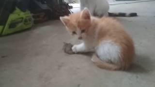 Котенок , кошка и мышка *Судьба Мики Мауса*