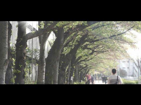 【音楽のみの風景動画】大泉学園の白子川、桜は散って、春の光、緑。