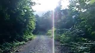 右の林からウサギが飛び出してきました。 直ぐに追いかけるれぴ助(サル...