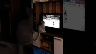 Кошки тоже смотрят хоккей)))) Матч Россия - Германия, 08.05.2017 г.