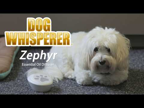 zephyr-essential-oil-diffuser---dog-whisperer