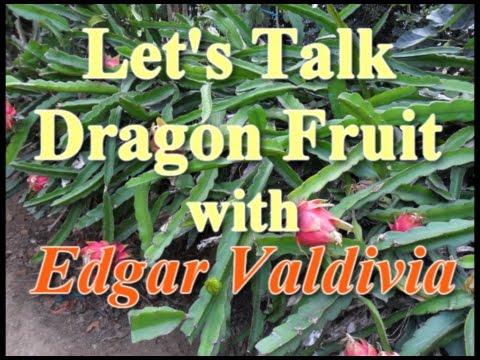 Let's talk Dragon Fruit