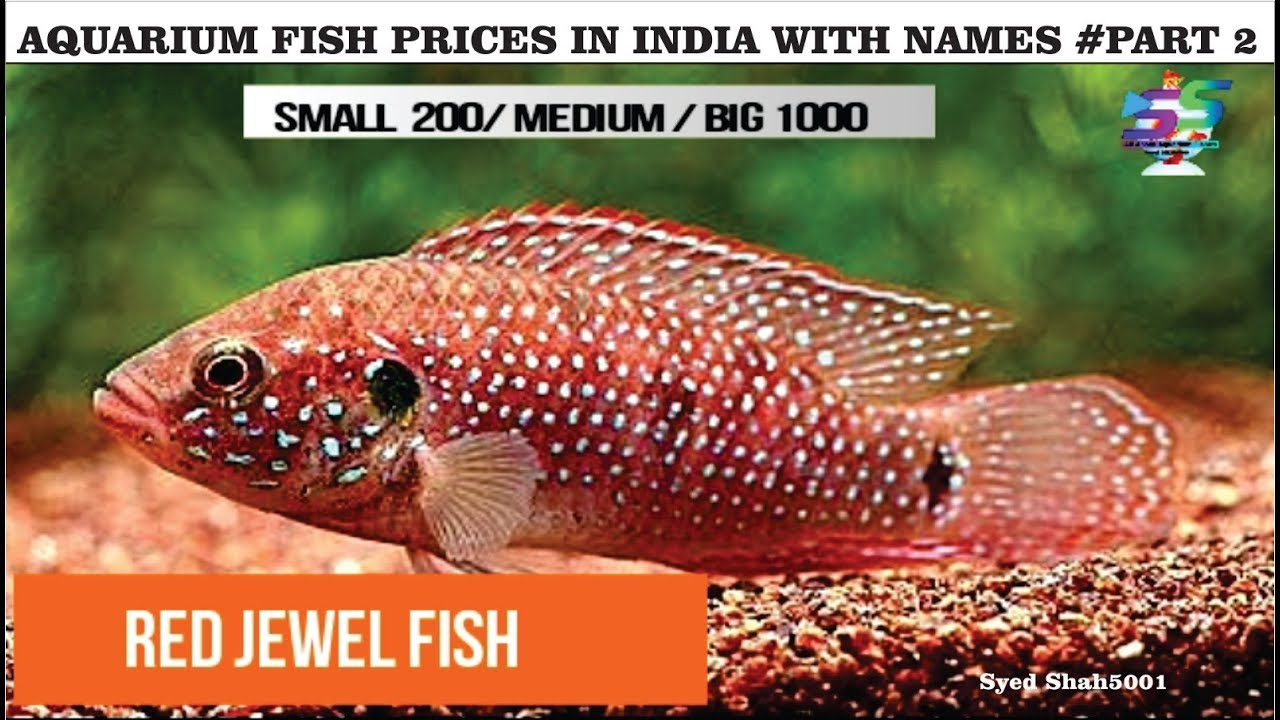 Aquarium Fish Prices In India With Name S 2018 Part2