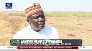 News Across Nigeria: Rice Farmers In Adamawa Affected By insurgency Get Loans --13/11/15 Pt 1