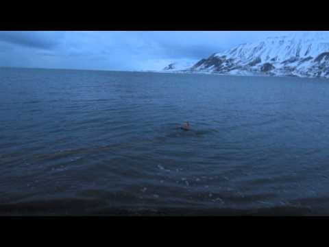 Taking a dip in the Greenland Sea
