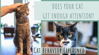 Attention Seeking Behaviors in Cats - Cat Behavior Explained