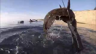 Spearfishing Mendocino county!