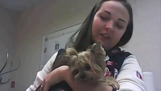 видео Как ухаживать за собакой после операции по удалению матки?