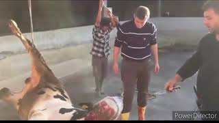 Qurbani competition on Eid-Ul-Adha Between Pakistan And Turkey 2020