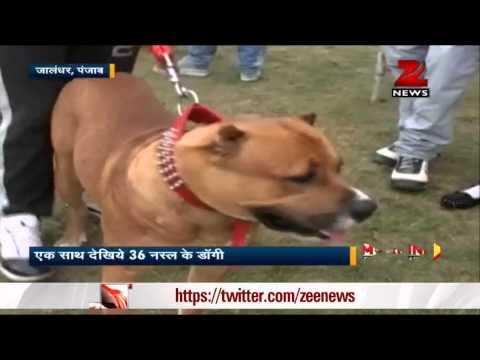 Dog show in Jalandhar, Punjab
