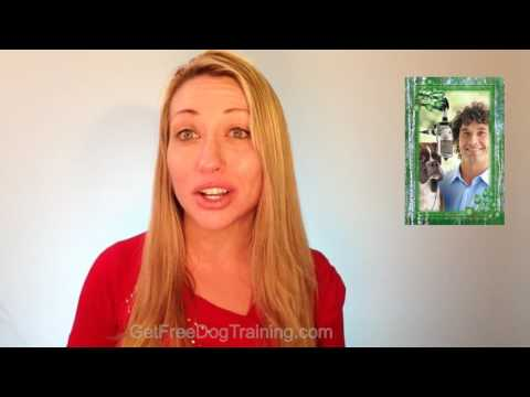 Doggy Dan's Online Dog Trainer Review - WARNING! Don't buy...(until you watch this)