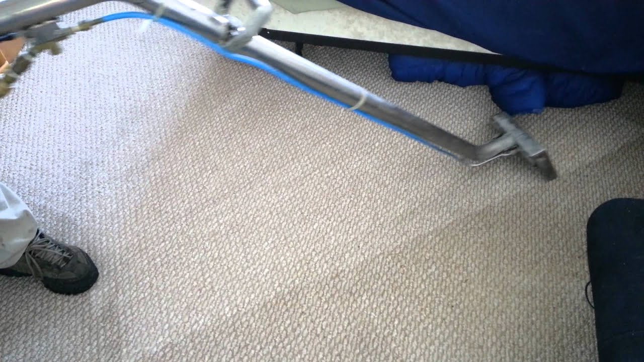 Carpet Cleaning 352 362 9090 Ocala Florida Pet Stain