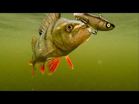 Late Summer Perch Fishing Wt Salmo Lures. Рыбалка на окуня поздним летом на мелководье.