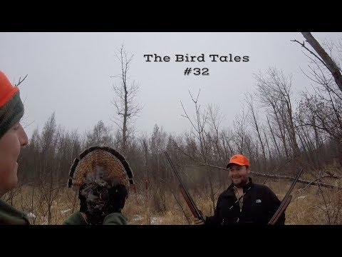 MN Public Land Ruffed Grouse And Pheasants-The Bird Tales #32