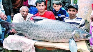 400 Years Old Biggest Fishing Fairs in Bangladesh । Big Fishing Videos । Big Fish Catching ।