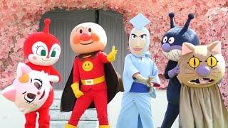アンパンマンショー  最新作【キリリッと参上!かつぶしまん】 アンパンマンとメロンパンナちゃん、ばいきんまん、ドキンちゃん登場  最前列高画質 Anpanman kidsshow thumbnail