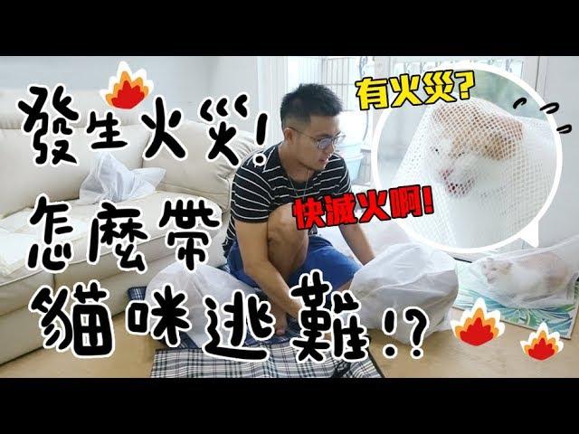【黃阿瑪的後宮生活】發生火災!怎麼帶貓逃難?