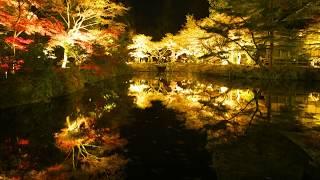 宝生寺ライトアップ