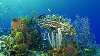#334. Подводный мир (В мире животных)