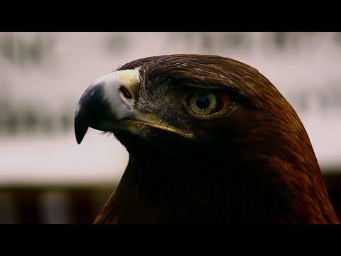 Taking Flight: The Carolina Raptor Center
