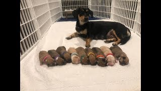 Rescued mom and babies are getting ready for their forever families| The Dodo Project Home LIVE