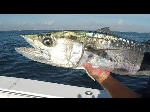 Awesome Day Catching King Mackerel In Media Day Tournament
