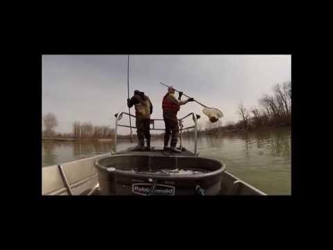 Electrofishing On Sandusky River / Ohio