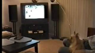 Dog Goes Crazy Watching Nj Devils Stanley Cup Win