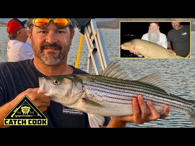 Monster Carp and Striped Bass [catch cook] USA, Lake Pleasant