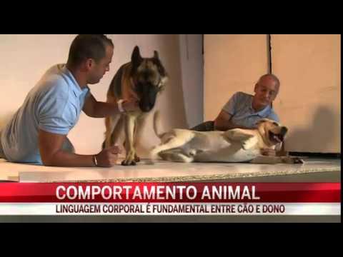 Roger Abrantes e Pedro Paiva (Pet B Havior) - En una entrevista a la CMTV