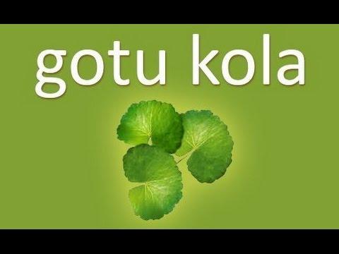 "Gotu Kola ""Promoter of Long Life"" - Centella Asiatica"