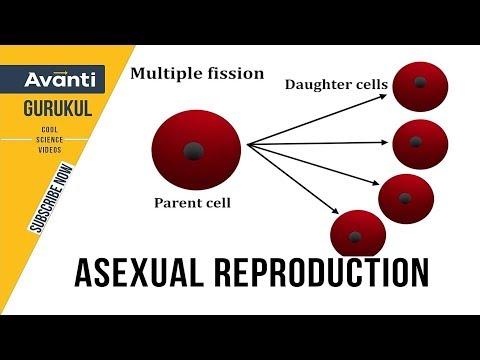 Asexual Reproduction Class 12 | Binary fission | Multiple fission | Spores | Class 12 Bio