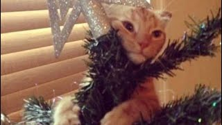 OMG, ANIMALS vs. CHRISTMAS GIFTS videos are just the FUNNIEST