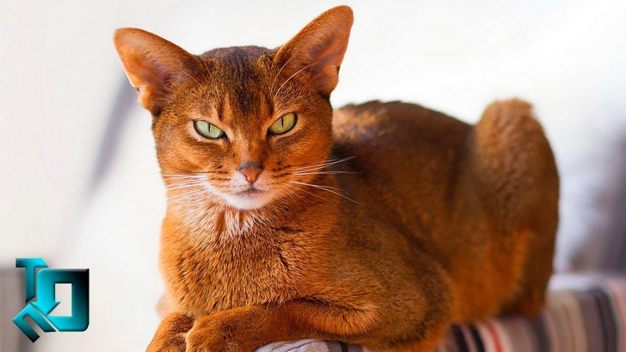 Самые Дорогие 10 Кошек в Мире | смотреть фильм полностью прогулка