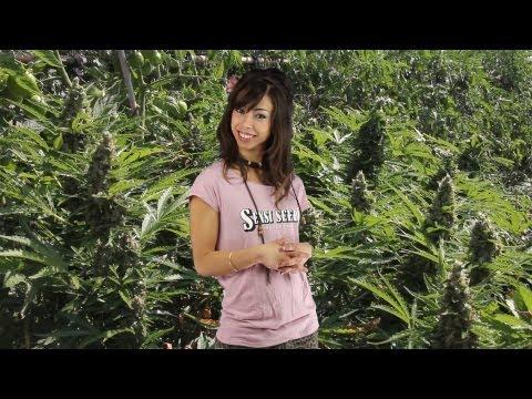 Marihuana Television News 15 - ROTOTOM SUNSPLASH 2013