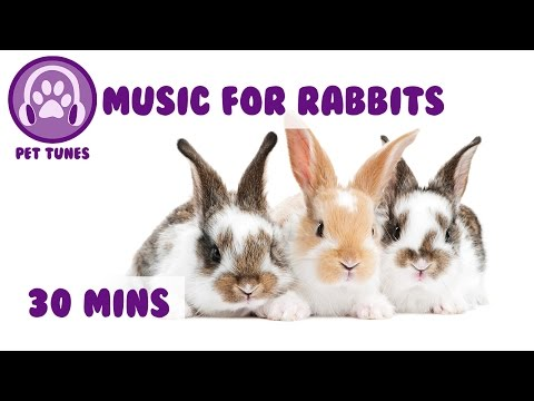 Relaxation Music or Rabbits! Rabbit Music to Help Calm Down your Bunny
