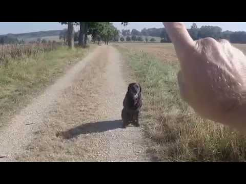 Hunde erziehen ohne Worte Teil1 , dog training without words Part 1