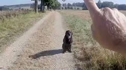 Hunde erziehen ohne Worte Teil1 , dog training without words Part 1
